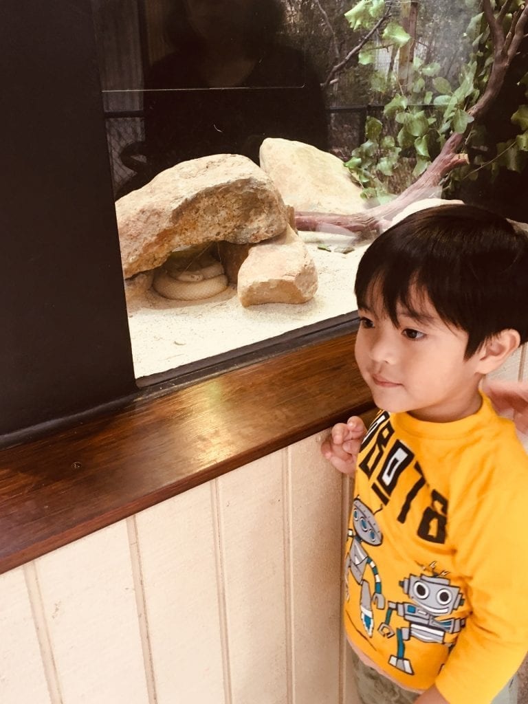 A boy stands in front of a rattlesnake enclosure at a zoo.